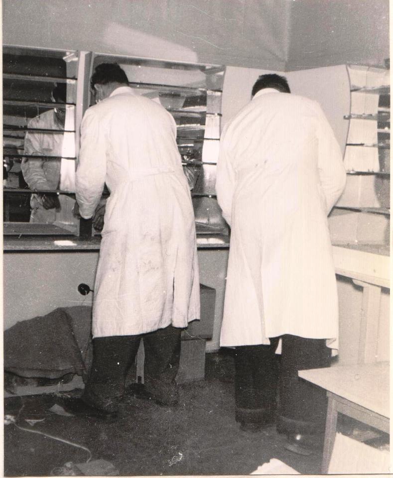 hermann_faller_1953